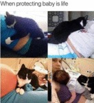When Protecting Baby Is Life..