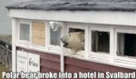 Polar Bear Broke Into A Hotel In Svalbard