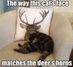 The Way This Cat's Face Matches The Deer's Horns..