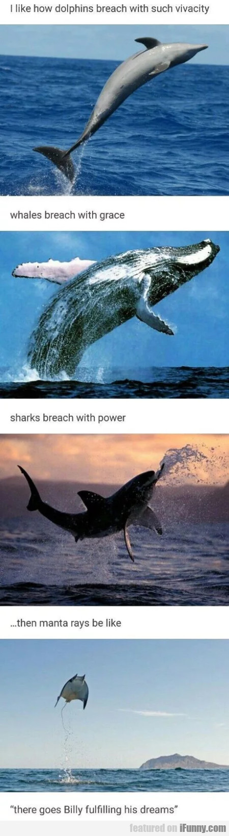 I Like How Dolphins Breach With Such Vivacity...