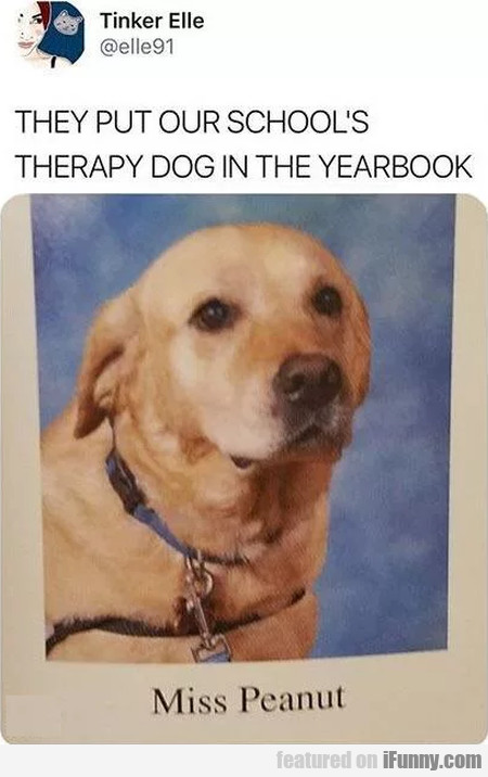 They Put Our School's Therapy Dog In The...