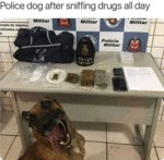Police Dog After Sniffing Drugs All Day