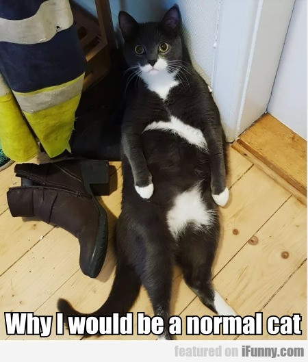 Why I Would Be A Normal Cat?