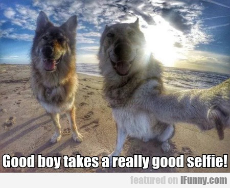 Good Boy Takes A Really Good Selfie!