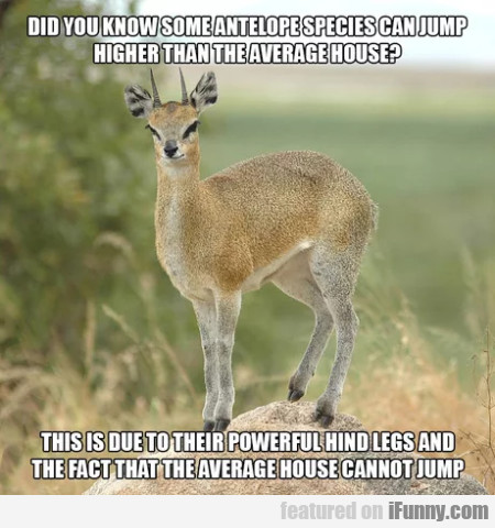 Did you know some antelope species can jump...