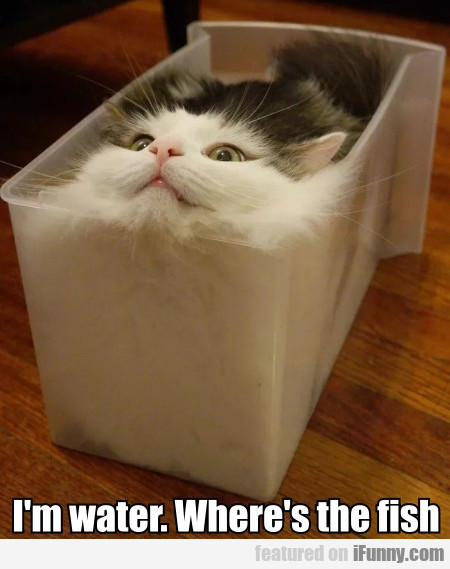 I'm Water. Where's The Fish?