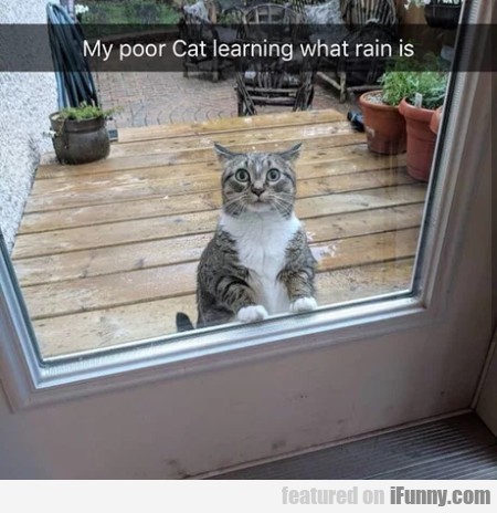 My Poor Cat Learning What Rain Is