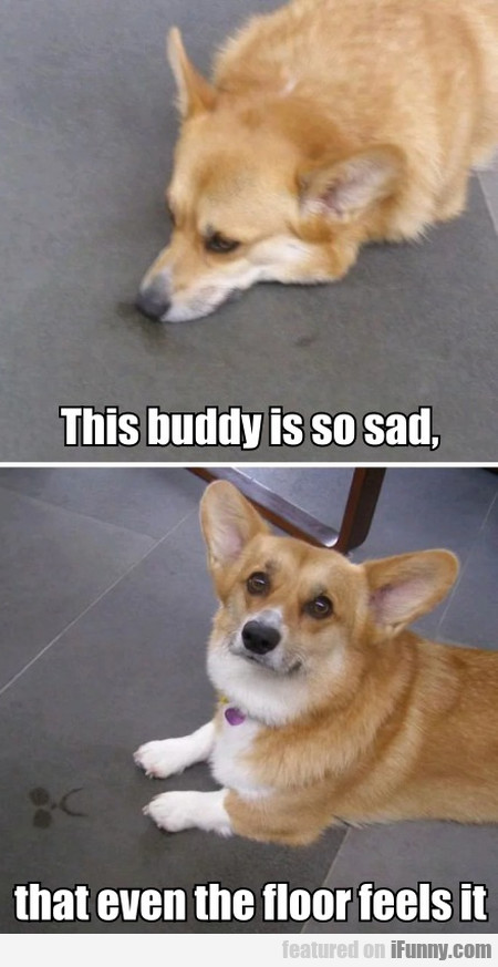 This Buddy Is So Sad, That Even The Floor Feels...