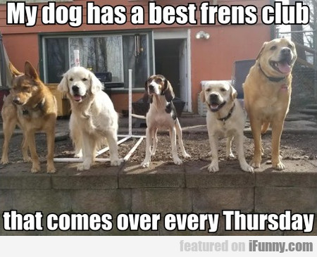 My Dog Has A Best Frens Club That Comes...