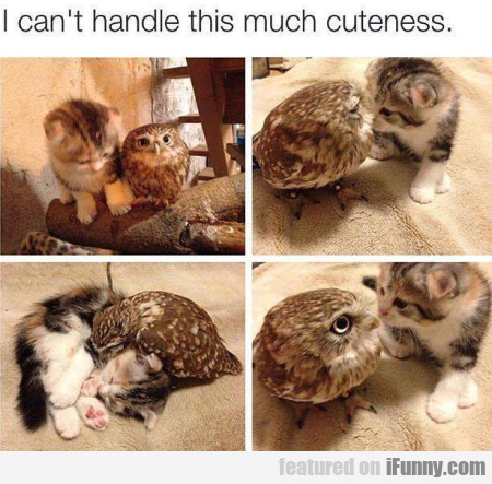I can't handle this much cuteness...