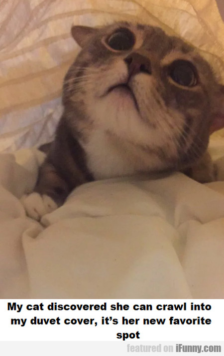 My Cat Discovere She Can Crawl Into My Duvet Cover