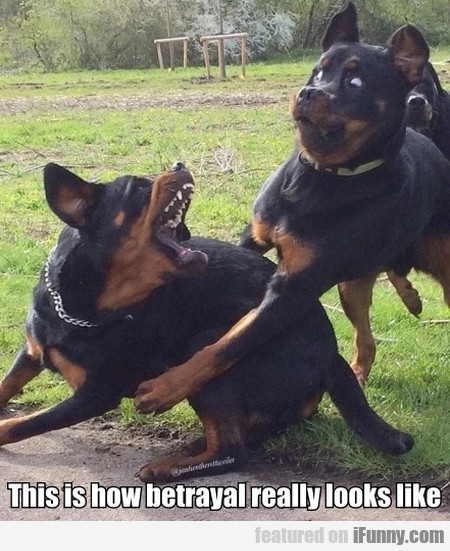 This is how betrayal really looks like