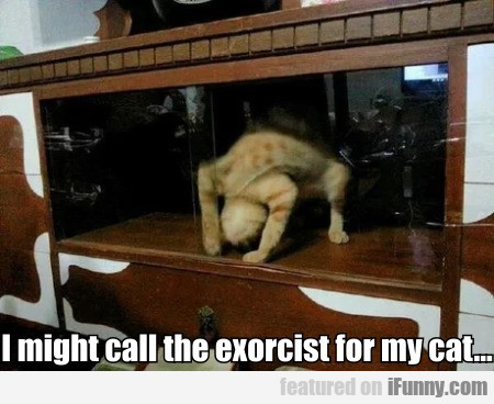 I Might Call The Exorcist For My Cat