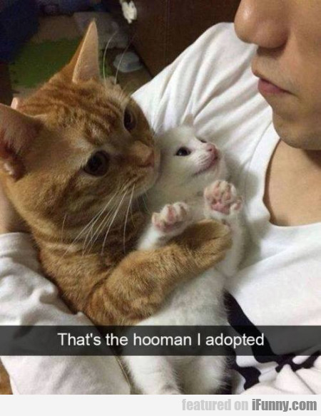 That's The Hooman I Adopted