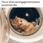 This Is What Cat Engagement Photos Would...