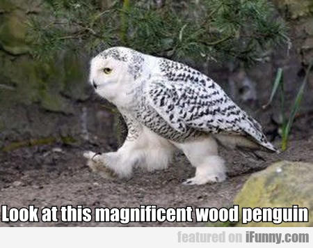 Look At This Magnificent Wood Penguin