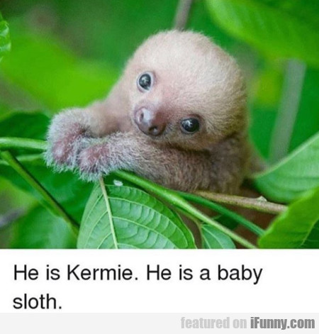 He Is Kermie. He Is A Baby Sloth