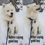 Before Saying Good Boy - After Saying Good Boy...