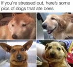 If You're Stressed Out, Here's Some Pics Of Dogs..