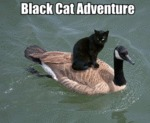 Black Cat Adventure