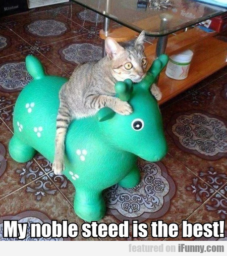 My Noble Steed Is The Best!