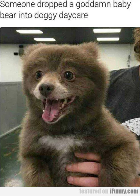 Someone Dropped A Goddamn Baby Bear Into...