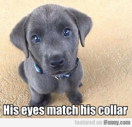His Eyes Match His Collar