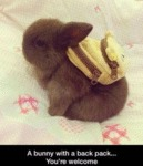 A Bunny With A Back Pack.. You're Welcome