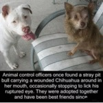 Animal Control Officers Once Found A Stray Pit..