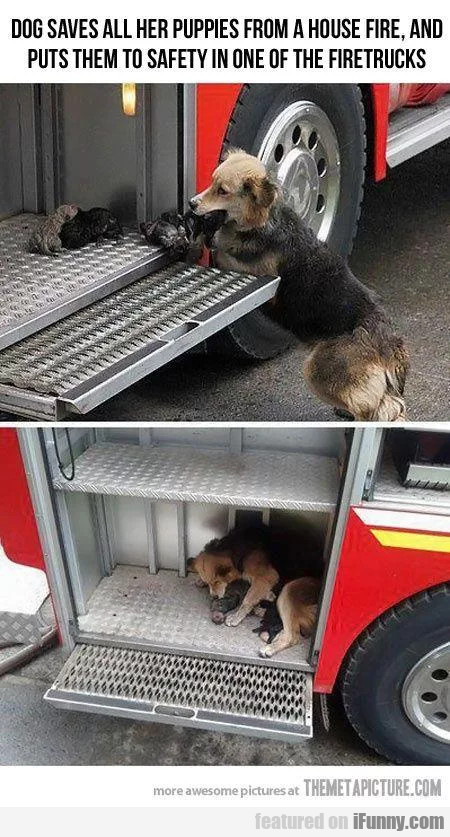 Dog Saves All Her Puppies From A House Fire And...