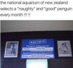 The National Aquarium Of New Zealand Selects...