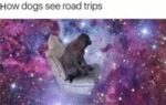 How Dogs See Road Trips