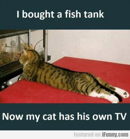 I Bought A Fish Tank - Now My Cat Has His...