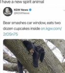 I Have A New Spirit Animal - Bear Smashes Car...