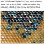After Bees In France Flew Off To Grab Some...