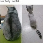 Just Fluffy... Not Fat