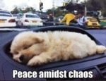 Peace Amidst Chaos