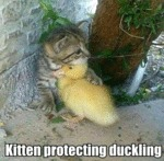 Kitten Protecting Duckling