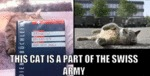 This Cat Is A Part Of The Swiss Army