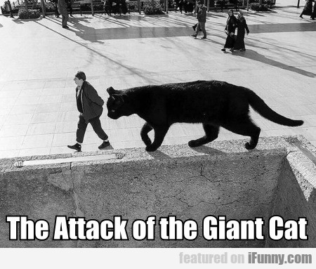 The Attack Of The Giant Cat