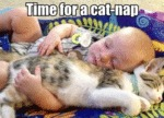 Time For A Cat-nap