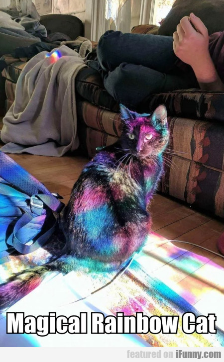 Magical Rainbow Cat