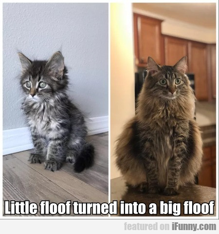Little Floof Turned Into A Big Floof