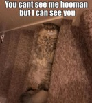 You Cant See Me Hooman But I Can See You...