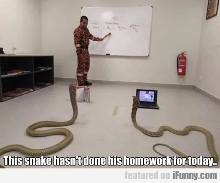 This Snake Hasn't Done His Homework For Today...