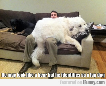 He May Look Like A Bear But He Identifies As A...