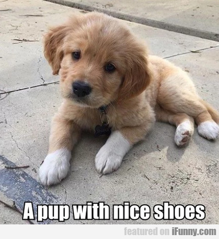 A Pup With Nice Shoes
