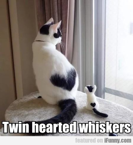 Twin hearted whiskers