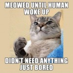 Meowed Until Human Woke Up - Didn't Need...