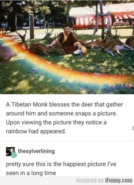 A Tibetan Monk Blesses The Deer That Gather...